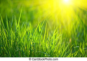 spring grass - fresh spring grass with warm sunlight shallow...