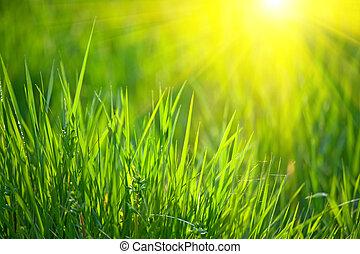 spring grass - fresh spring grass with warm sunlight shallow...