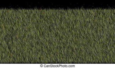 fresh spring grass,depth of field,3D animation,HD 1080p TIP