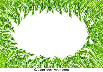 Fresh spring green Fern leaf isolated on white background.