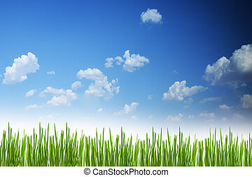 Fresh spring green grass background with blue sky