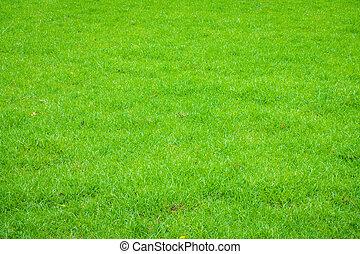 Fresh spring green grass .