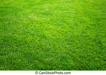 fresh spring green grass, natural background texture