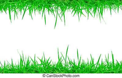 Fresh spring green grass on white background with copy space.