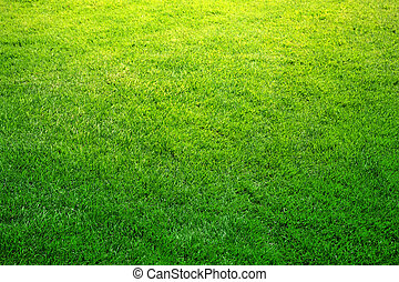 fresh spring green grass,