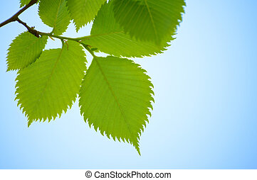 Fresh Spring Green Leaves Over Bright Sky