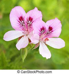 Fresh spring purple flowers in bloom