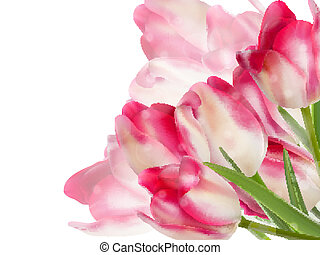 Fresh spring tulip flowers isolated on white. And also includes EPS 10 vector