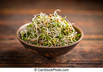 Fresh sprouted seeds in bowl