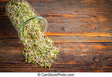 Fresh sprouted seeds with space for your text