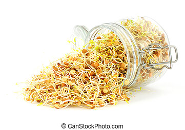 Fresh Sprouting Lentils In A Glass storage jar