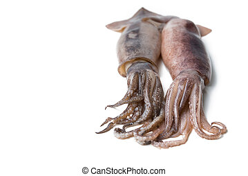 fresh squid isolated on white