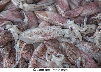 fresh squid on the market