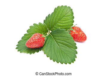 Fresh strawberry fruits with green