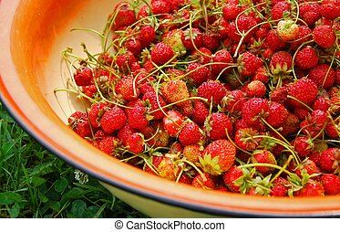 Fresh strawberry in a basin on the grass