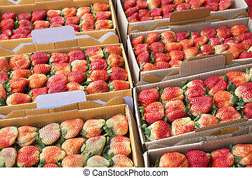 Fresh strawberry packaging in box