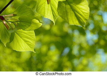 Fresh Summer Leaves on Blurred Green Background
