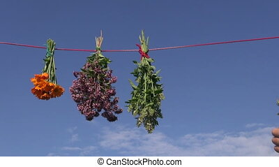 medical herbs hanging on red string