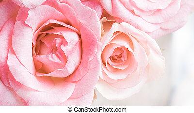 pink roses - Fresh summer organic pink roses close up