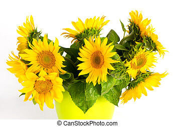 fresh sunflowers over white background