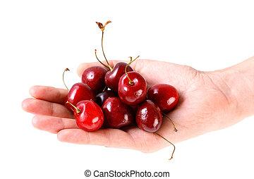 Fresh sweet cherries in hand on a white background. Juicy summer berries closeup.