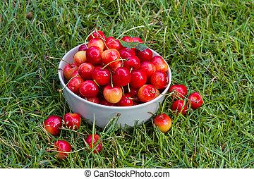 fresh sweet cherry fruits