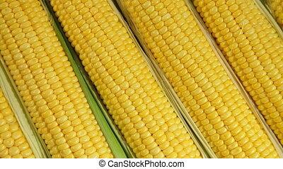 Fresh sweet corn background