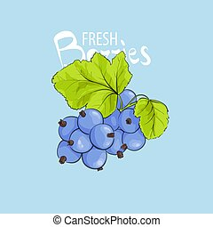fresh sweet currant - Vector illustration of bright sweet...
