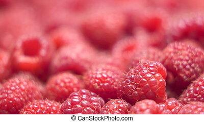 Fresh sweet raspberries background. Ripe raspberry dolly shot close-up