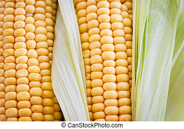 Fresh sweet yellow corn