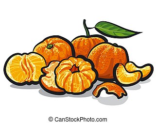 illustration of the tangerines on the white background