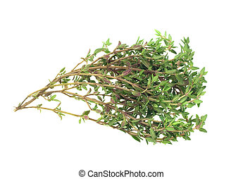 fresh thyme herb isolated on a white background