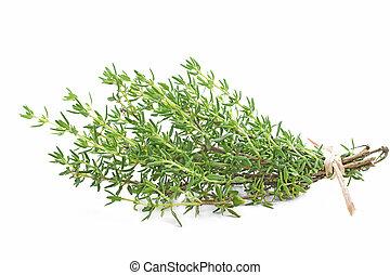 Fresh thyme herb on white background