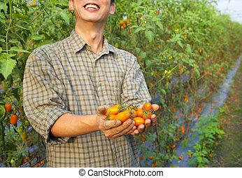 fresh tomato in happy farmer's hand