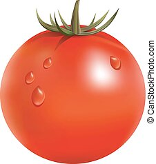Fresh tomato isolated on the white background vector illustration