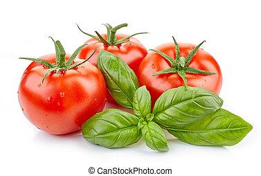 fresh tomatoes and basil leaf