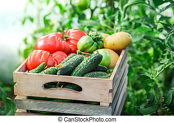 Fresh tomatoes and cucumbers in greenhouse