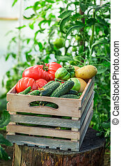 Fresh tomatoes and cucumbers in wooden box