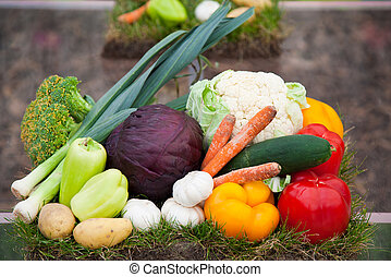 Fresh tomatoes, bell peppers, carrots and other vegetables