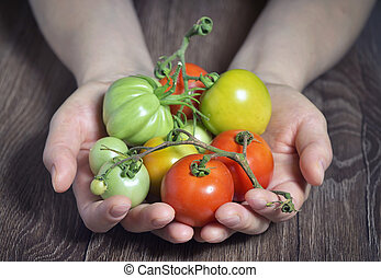 Fresh tomatoes in hands