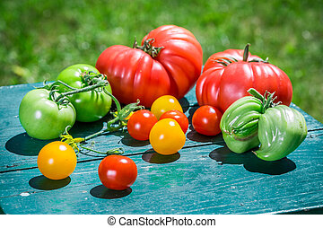 Fresh tomatoes in the countryside
