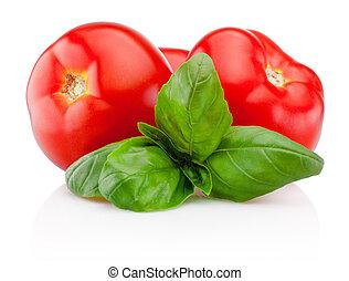 Fresh tomatoes with basil isolated on white background