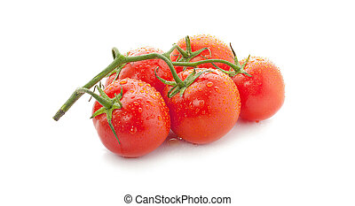 fresh tomatoes with water drops. Isolated on white background