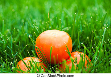 fresh tomatos laying on green grass