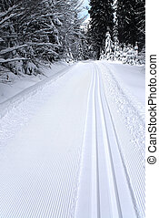 fresh track for cross-country skiing through the forest with...