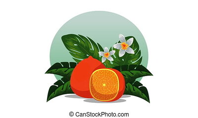 fresh tropical and exotic oranges fruits , hd video...