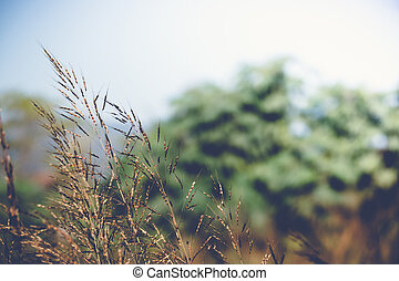 fresh tropical meadow background