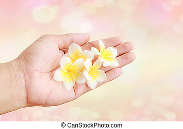 tropical Plumeria flower in hand holding with colorful bokeh background