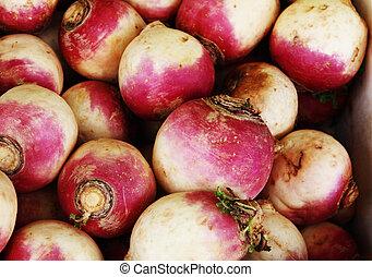 fresh turnip - background of fresh pulpy turnip on the ...