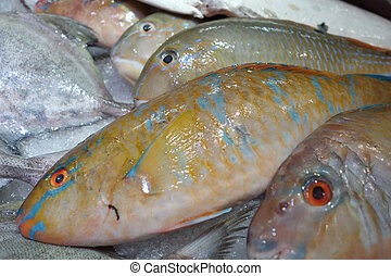 TuskFish in market for sale